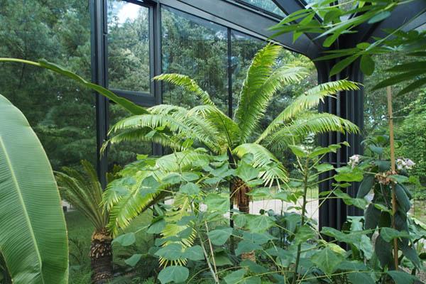 Im Gewächshaus Botanischergarten Grüningen